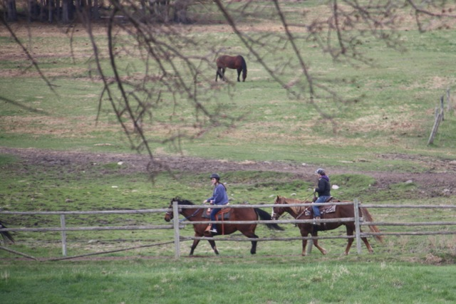 UNPAC - horses
